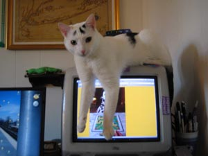 Picture of a cat draped over an iMac.